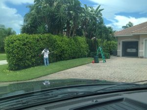 Tree Trimming Service in Jupiter Florida